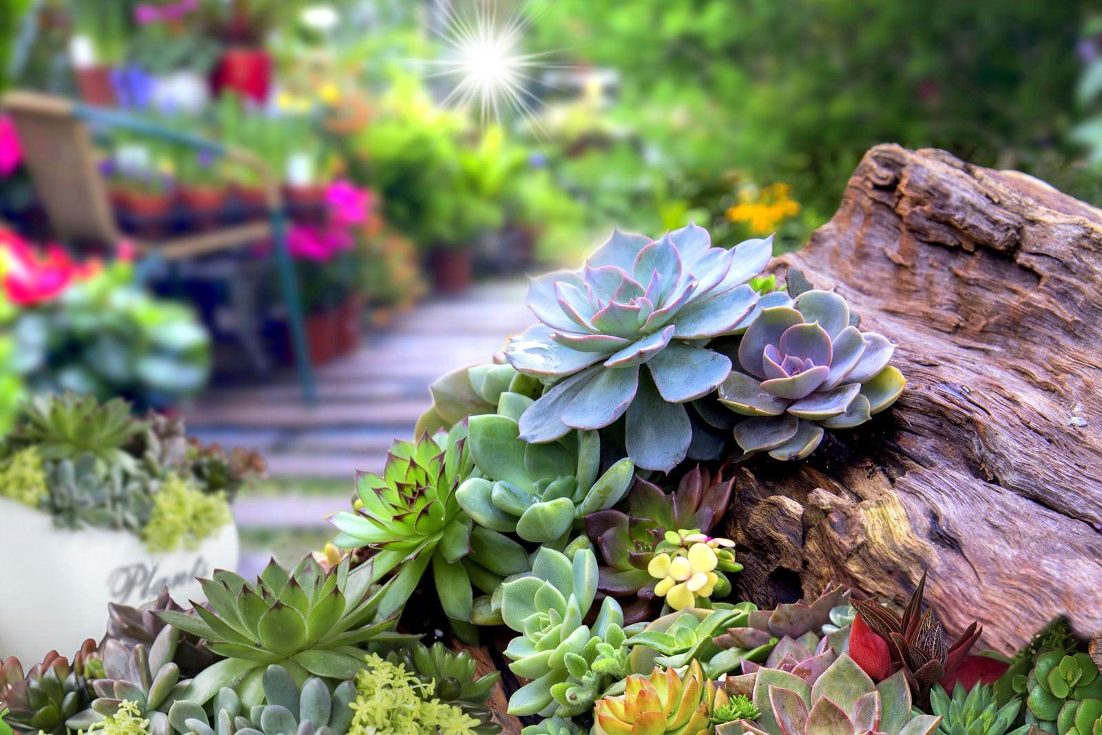 Preparing A Succulent Garden Bed How To Prepare Soil For A Succulent Garden
