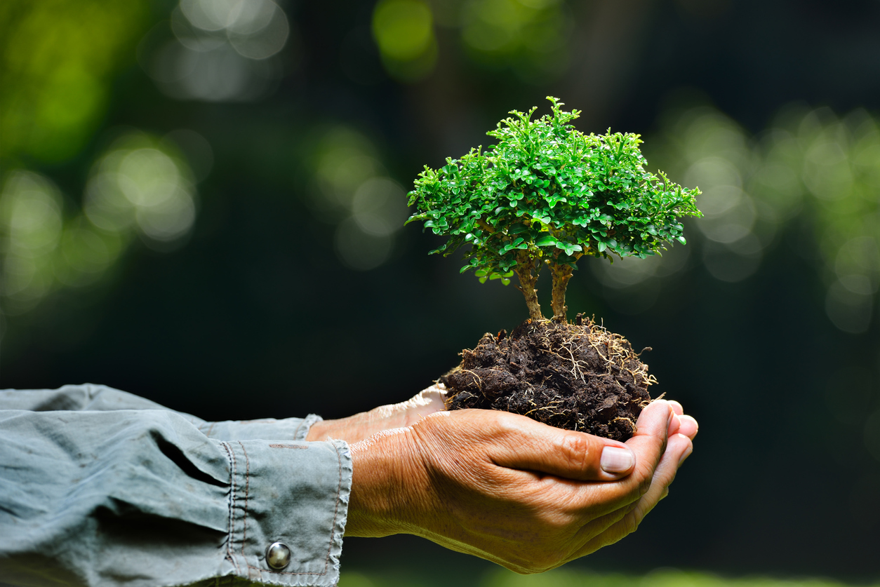 Bonsai Soil Information And How To What Is Bonsai Soil Made Up Of