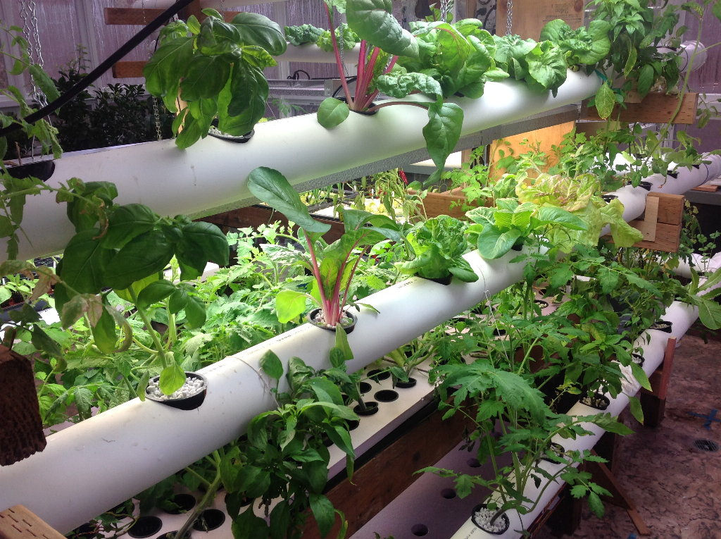 Pvc Pipe Garden Ideas What To Do With Pvc Pipes In The Garden