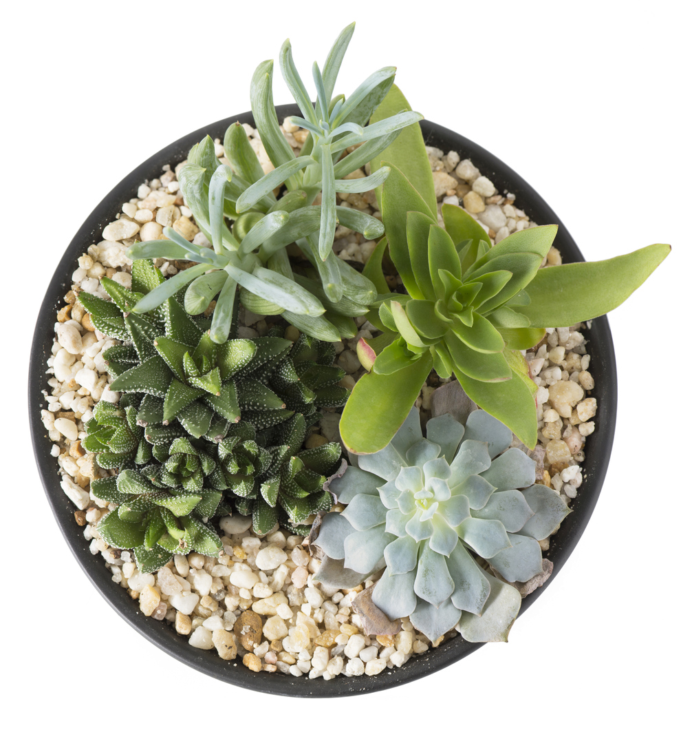 Should I Remove Glued Down Rocks How To Care For A Plant With Glued On Rocks