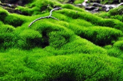 Tips Information About Moss Gardening Know How