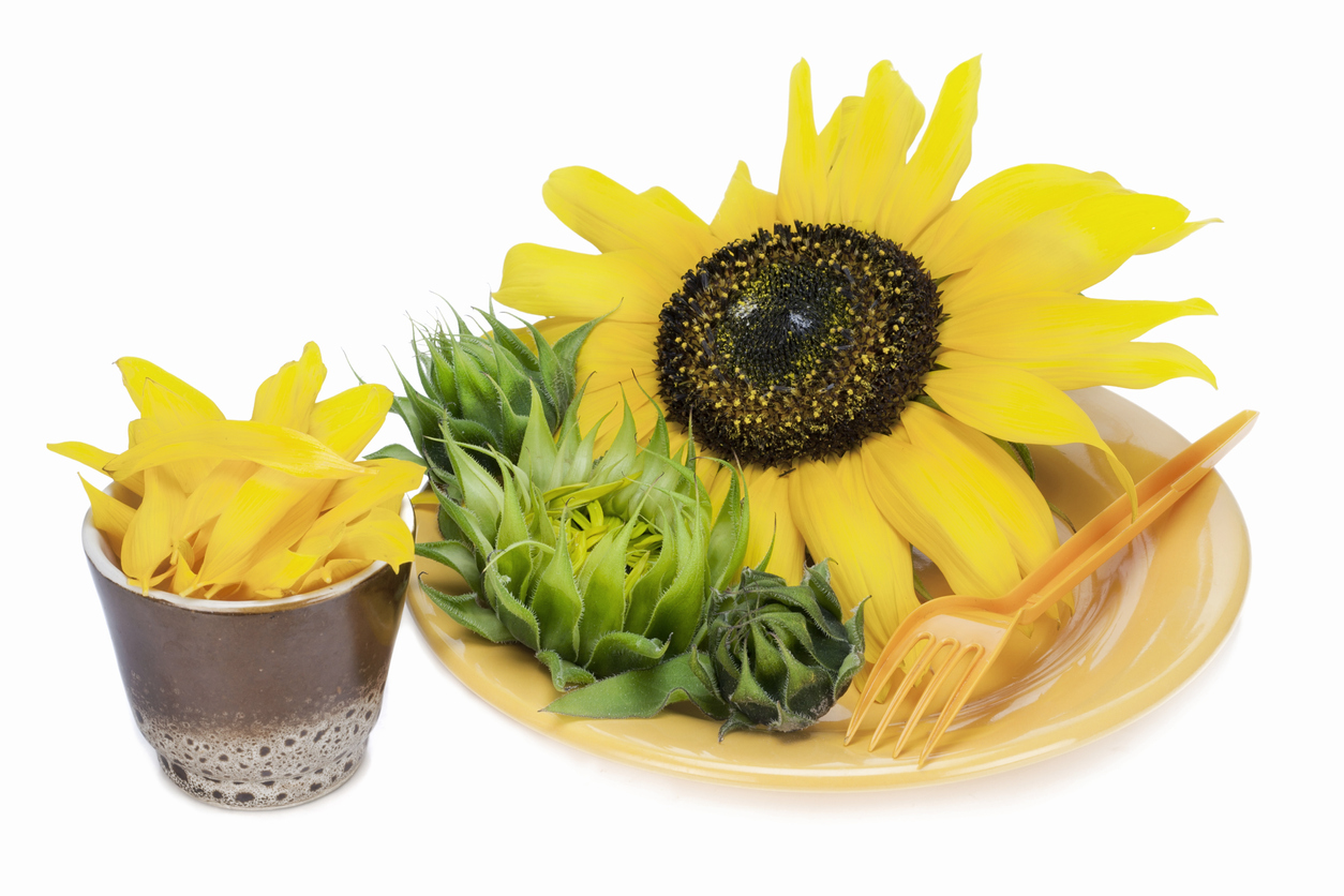 Can You Eat A Sunflower Head Learn About Eating Petals And Buds