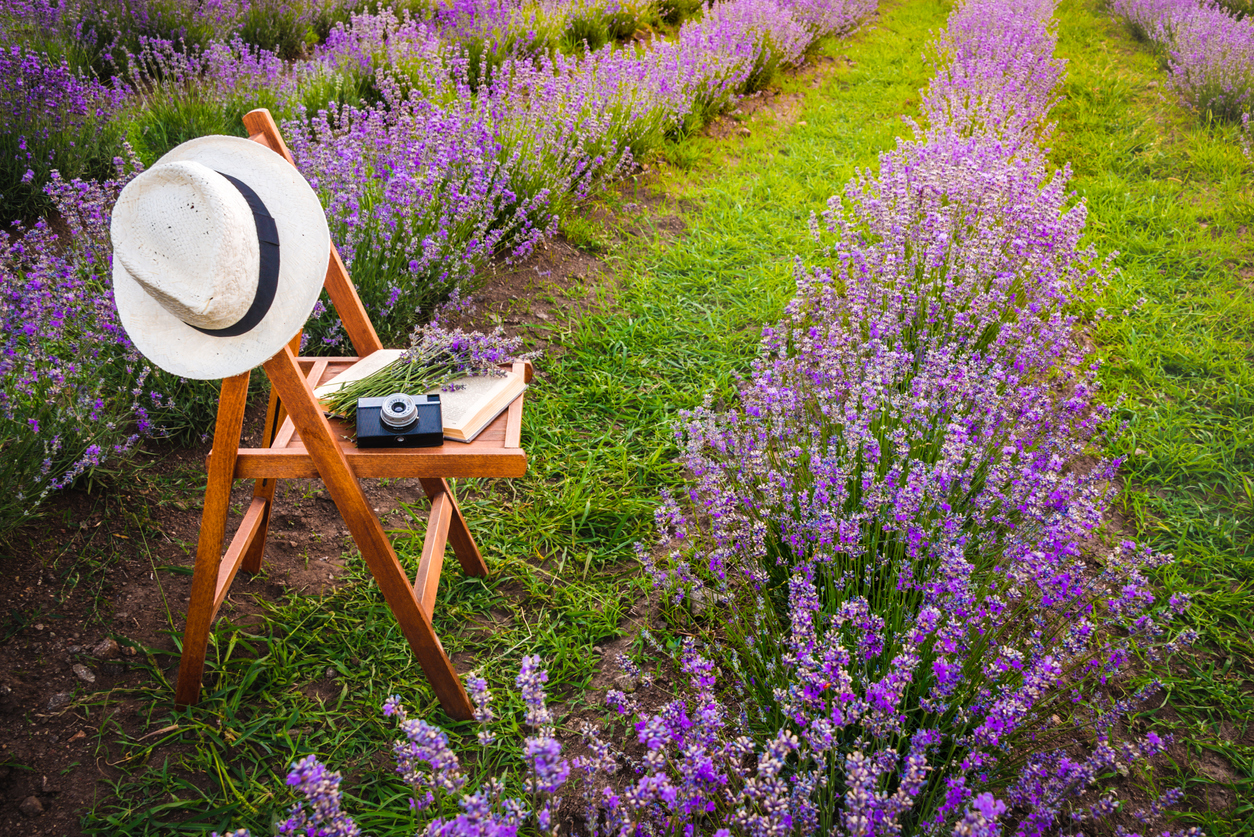 How To Create A Lavender Garden: Planting A Garden Of Lavender Flowers