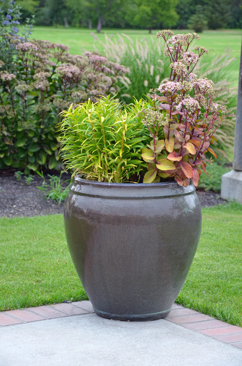 Plants That Can Grow In Urns Information On Garden Urn Planting
