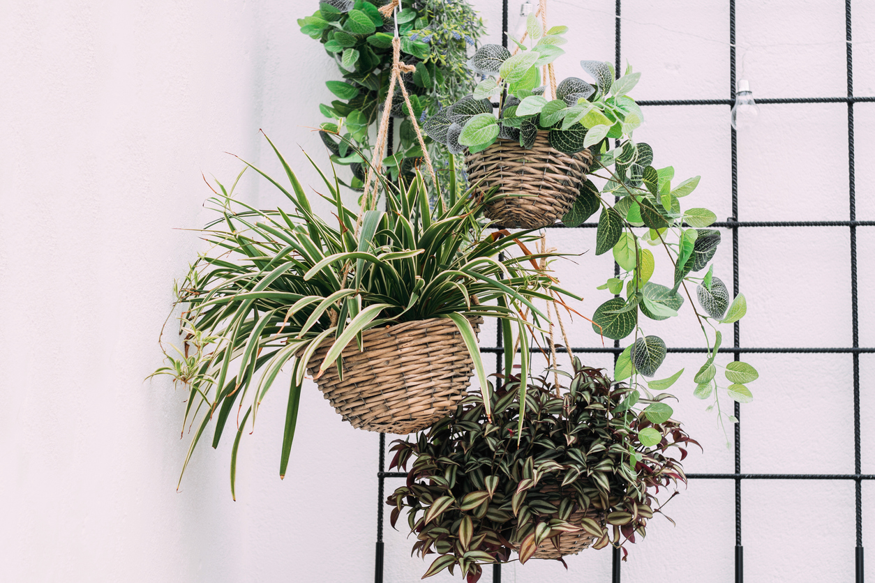 Houseplant Display Ideas Tips For Displaying Potted Plants In The Home