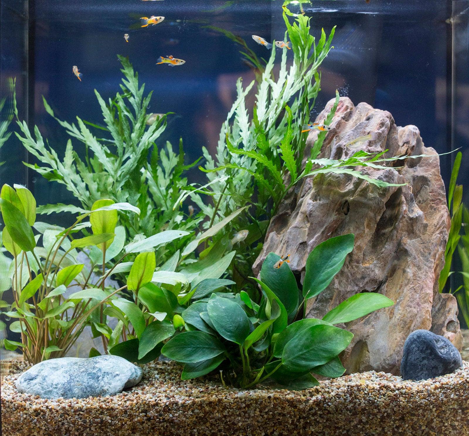 Unconventional Aquarium Plants Tips