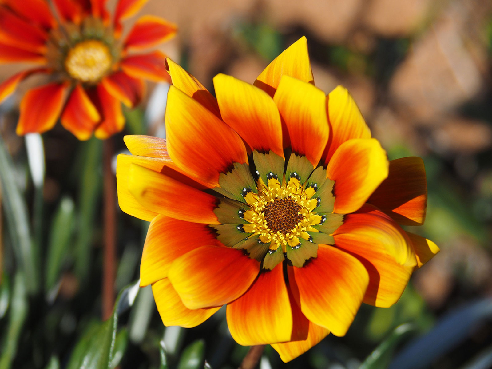 What Causes Double Blooms Learn The Science Behind Double Flowers