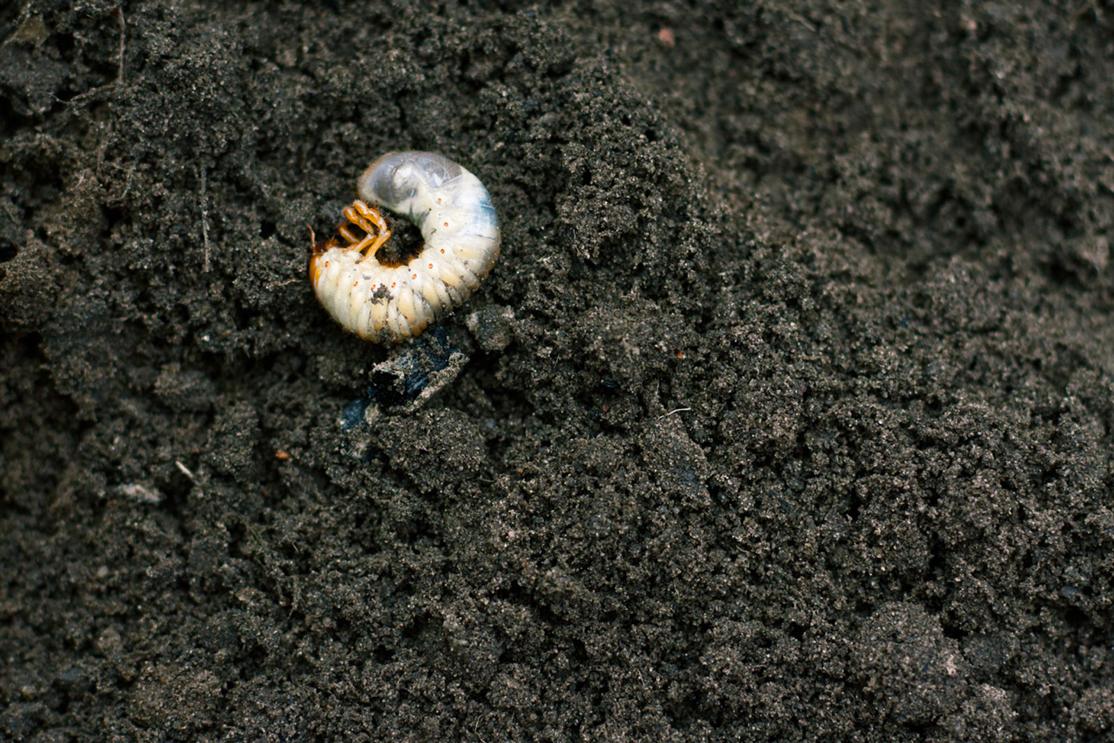 Controlling Grubs In Potted Plants