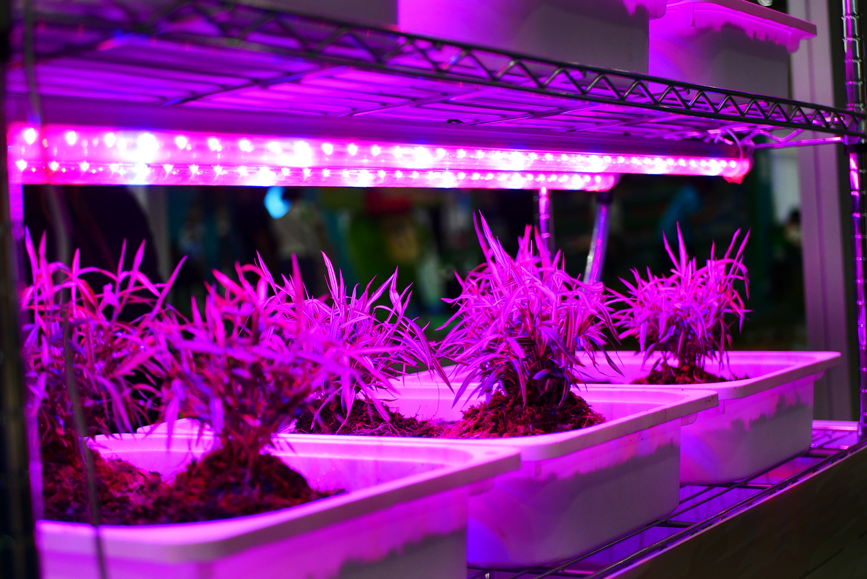 Difference Between LED Lights And Grow Lights: Are LED Lights Better For  Plants
