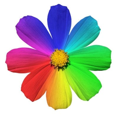 The Meaning Of Flower Colors – Learn What Flower Colors Symbolize