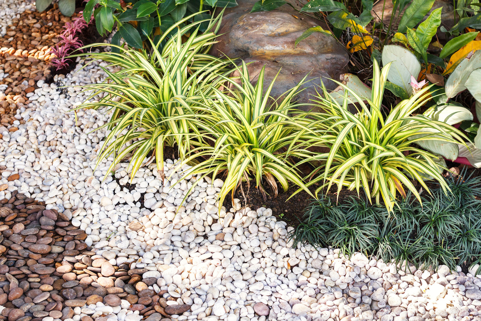 Gravel Garden Designs: Learn About Different Types Of Gravel Gardens