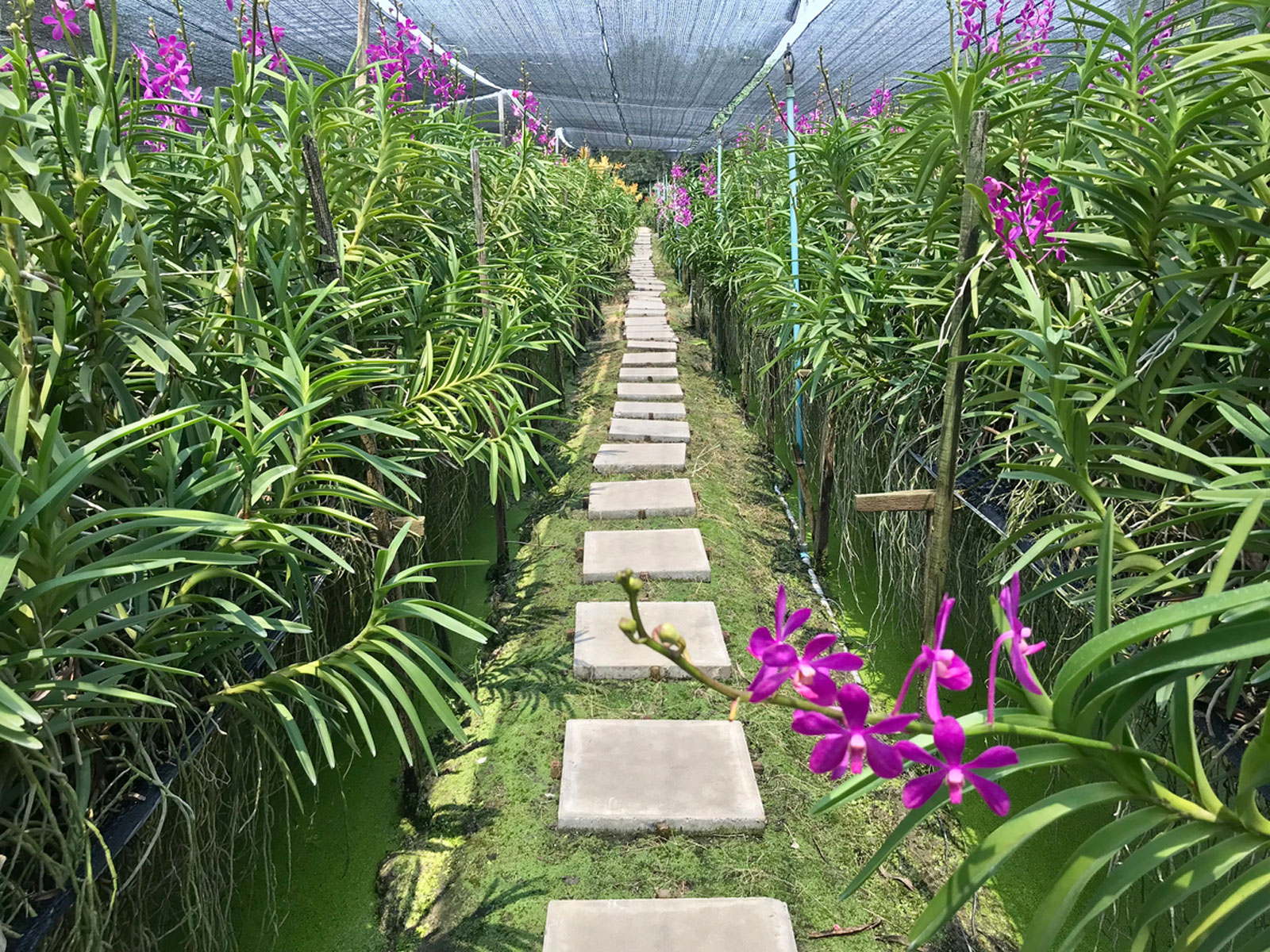 Greenhouse Flooring Ideas What To Use