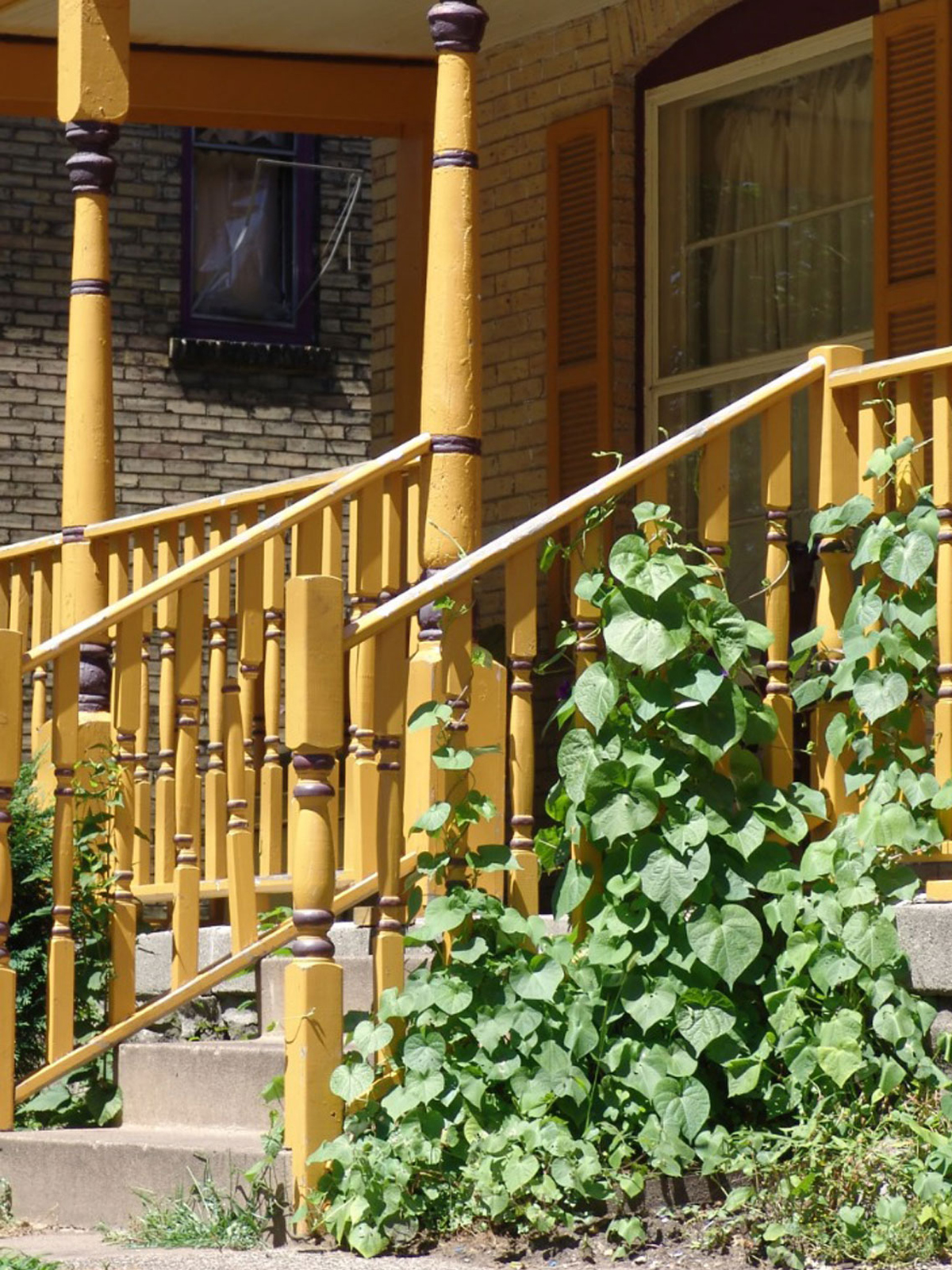 decorative interior wrought iron railing wrought iron.htm balcony railing support for plants     can you grow vines on a handrail  balcony railing support for plants