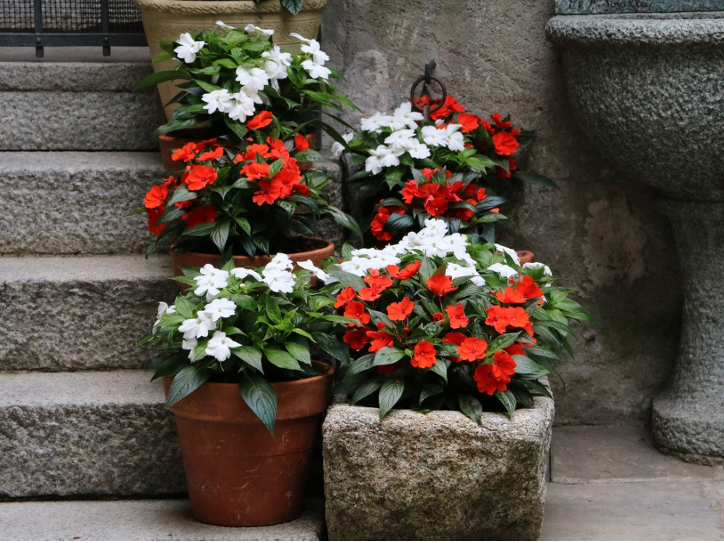 Best Shade Flowers For Pots Growing Shade Flowers In Containers