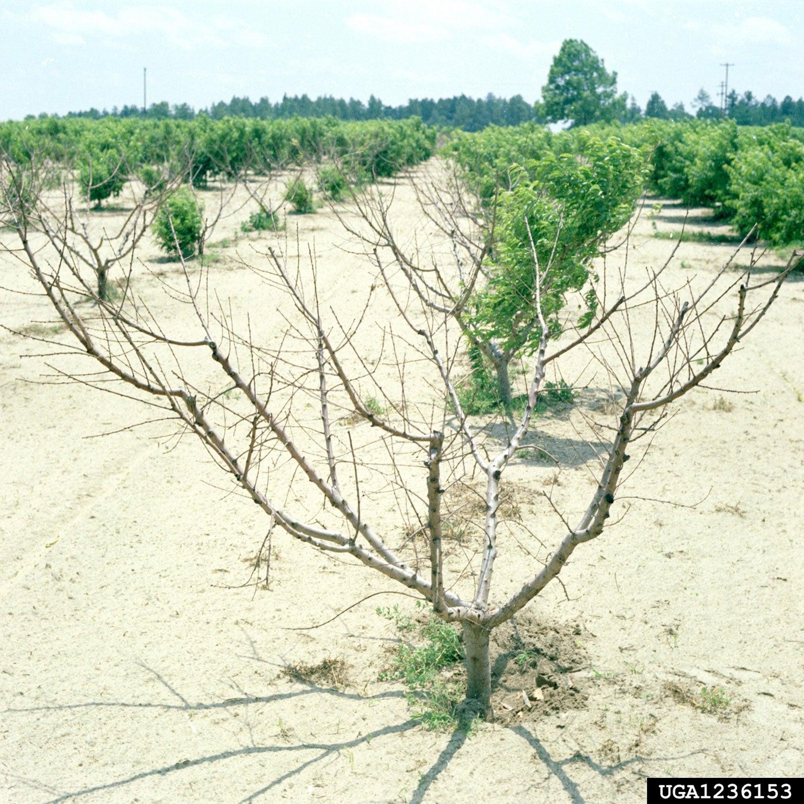 Schimbările climatice au încetinit creșterea productivității agricole cu 21% din 1961 încoace