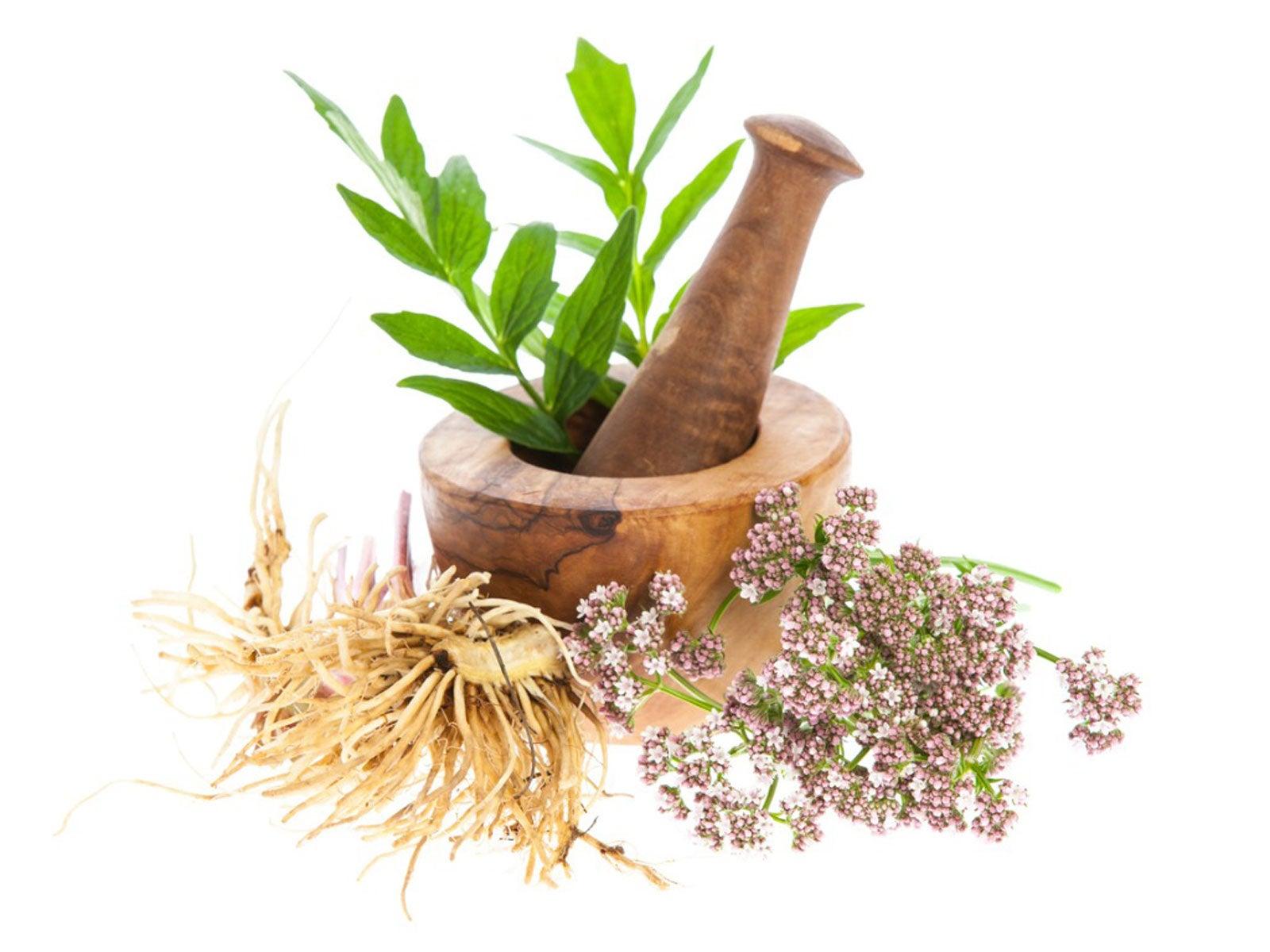 herbs comprese în varicoză)