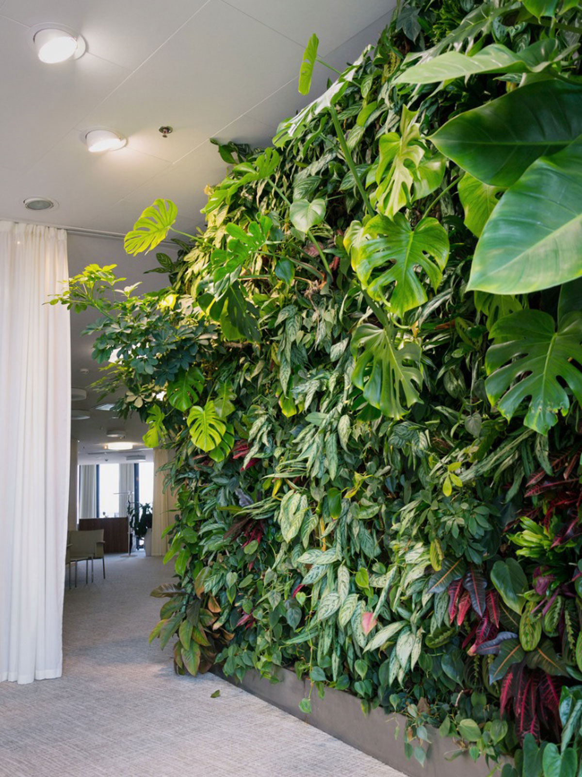Plants For An Indoor Wall Houseplants For Indoor Vertical Gardens