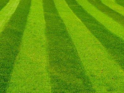 Tips Information About General Lawn Care Gardening Know How