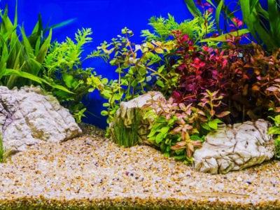Aquascape Design Ideas Different Types Of Aquascapes