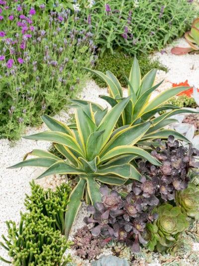 Southwest Gardening, Southwest Garden Plants