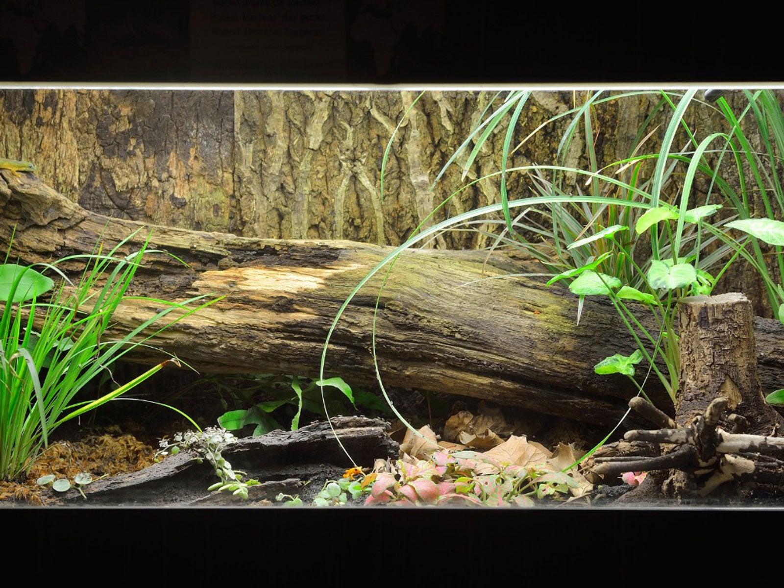 Fish Tank Terrarium Converting A Fish Tank Into A Terrarium Garden