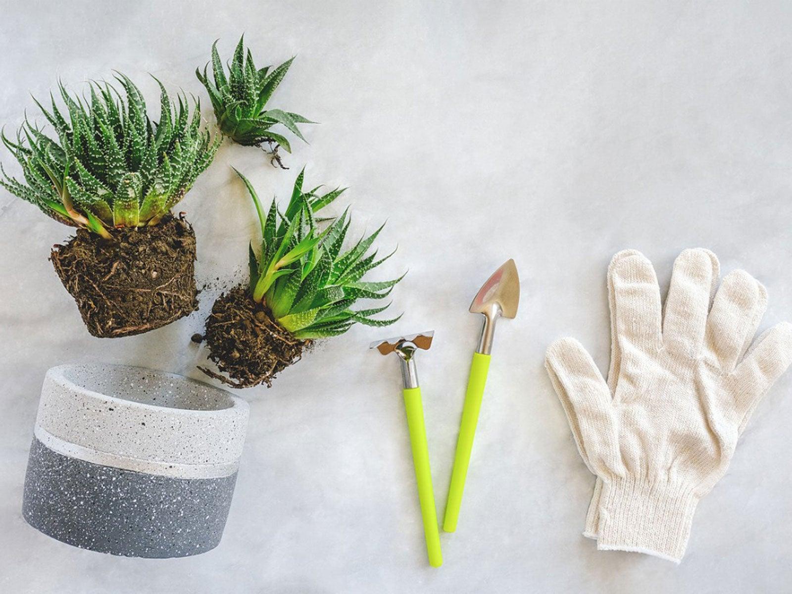 Succulent Essentials Essential Tools For Succulent Growing