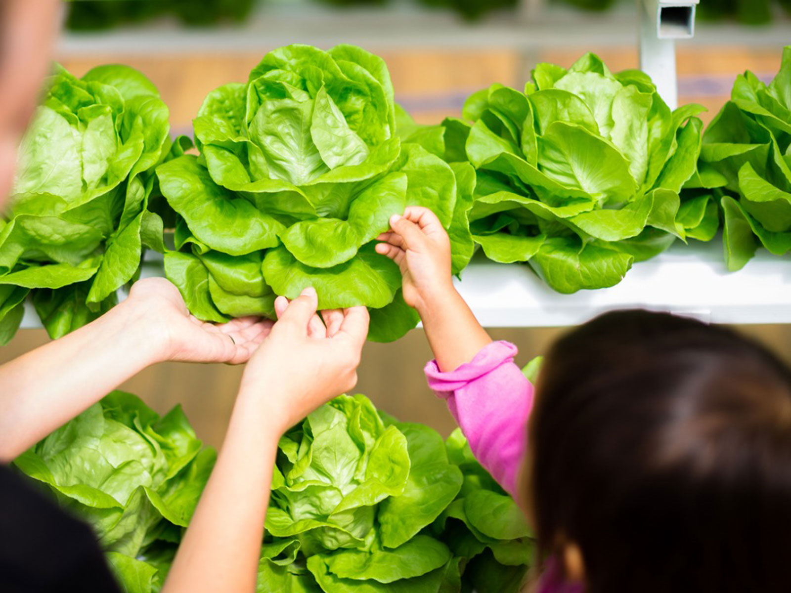 Kids And Hydroponic Farming Growing Food With Hydroponic Farms