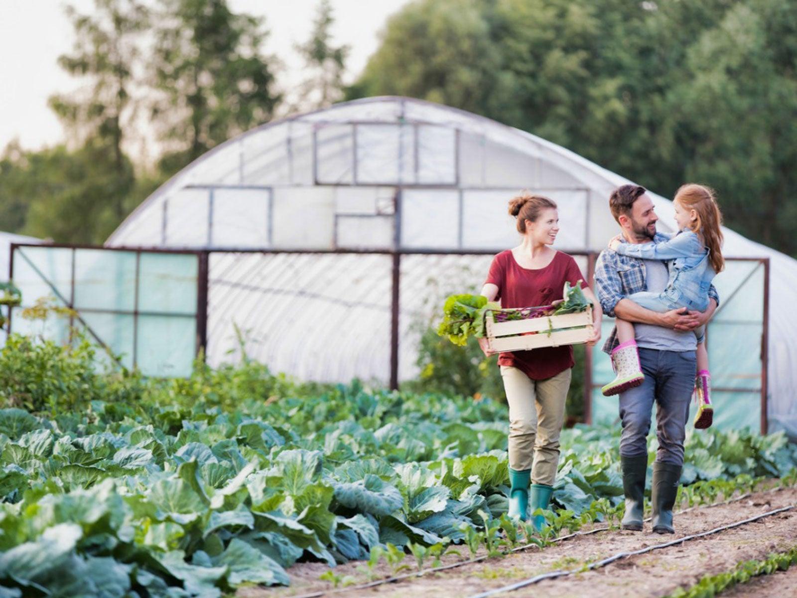 Small Backyard Farm Learn The Basics Of Starting A Small Farm