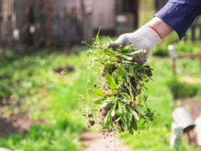Managing Weeds Ideas For Weed Control, Weed Control For Gardens