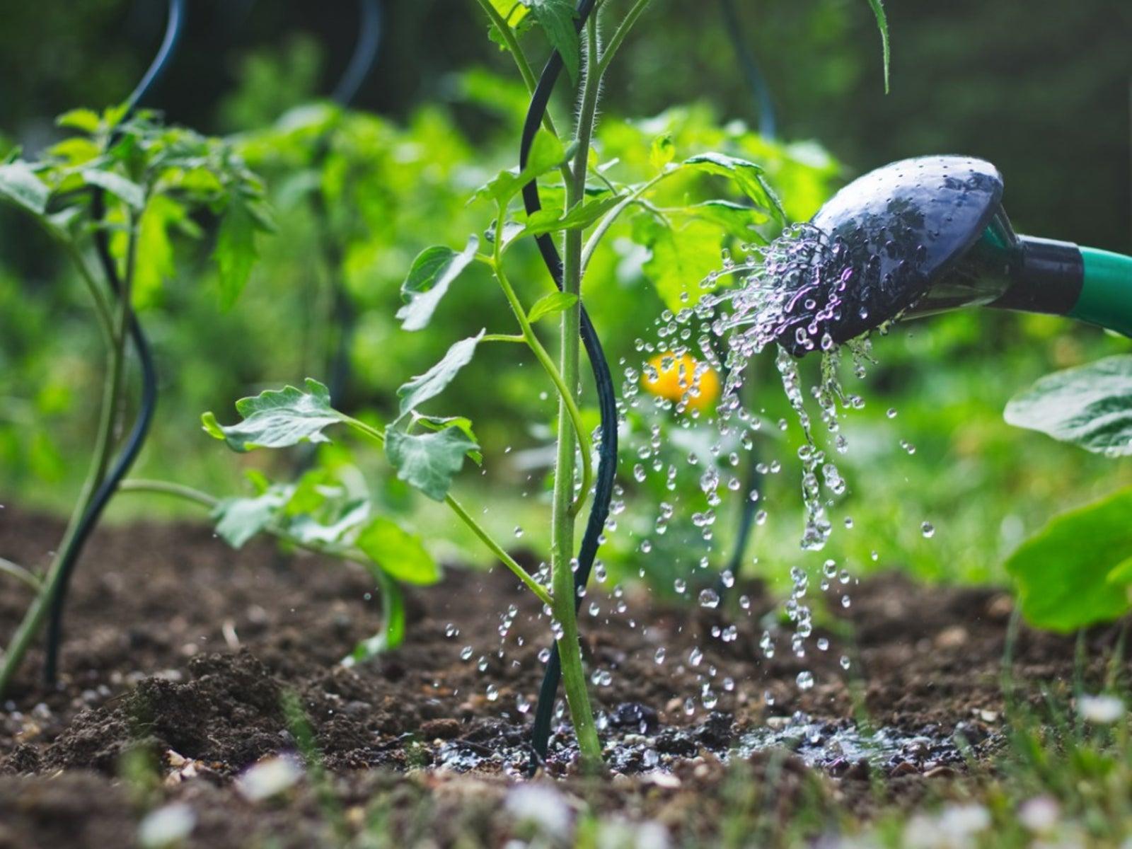 Image result for watering garden soil