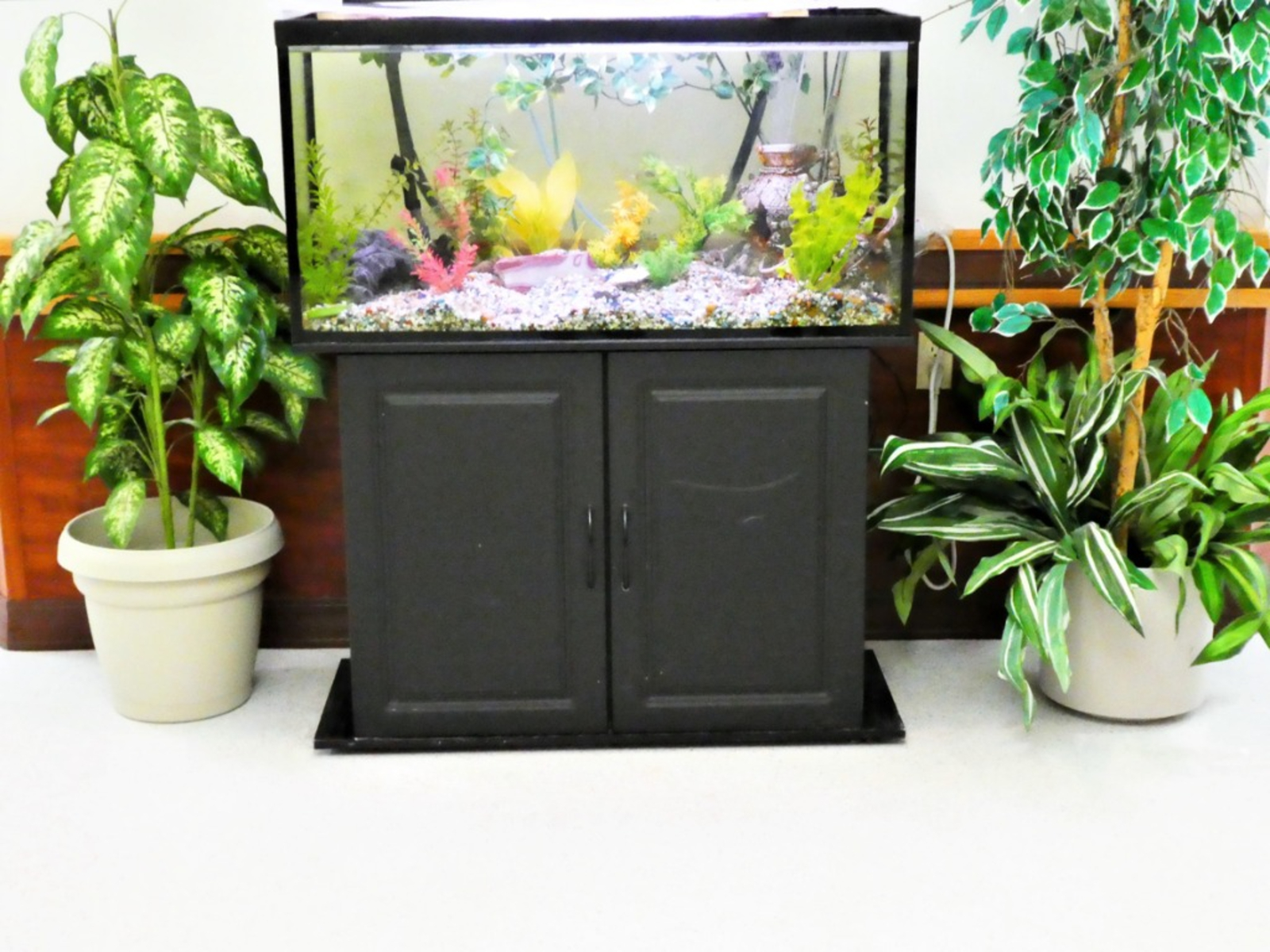 Can You Irrigate Plants With Aquarium Water Watering Plants With Aquarium Water
