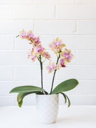 10 Tips Merawat Bunga Supaya Tidak Cepat Layu