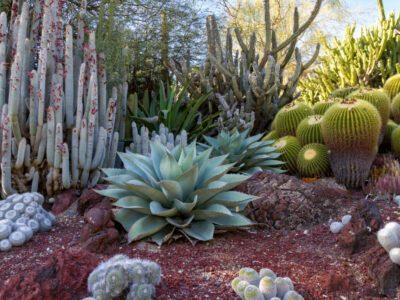 Desert Garden Theme What Plants Are, Desert Garden Ideas
